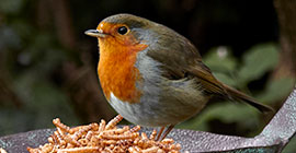 Top tips for feeding wild birds