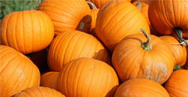 Pumpkins: How to Grow