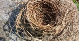 Tips & Advice for Creating the Ideal Nesting Location