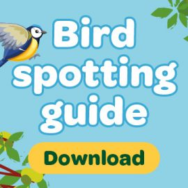 Download button with words bird spotting guide