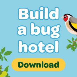 Download button with words build a bug hotel