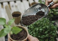 Compost for Seeds and Young Plants