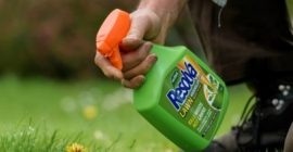 How to Kill Weeds in your Lawn