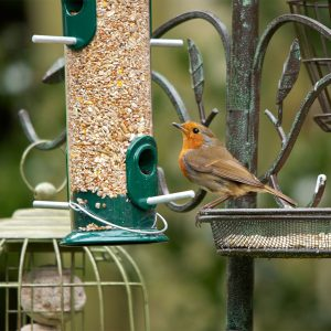 Peckish All Weather Seed Feeder lifestyle