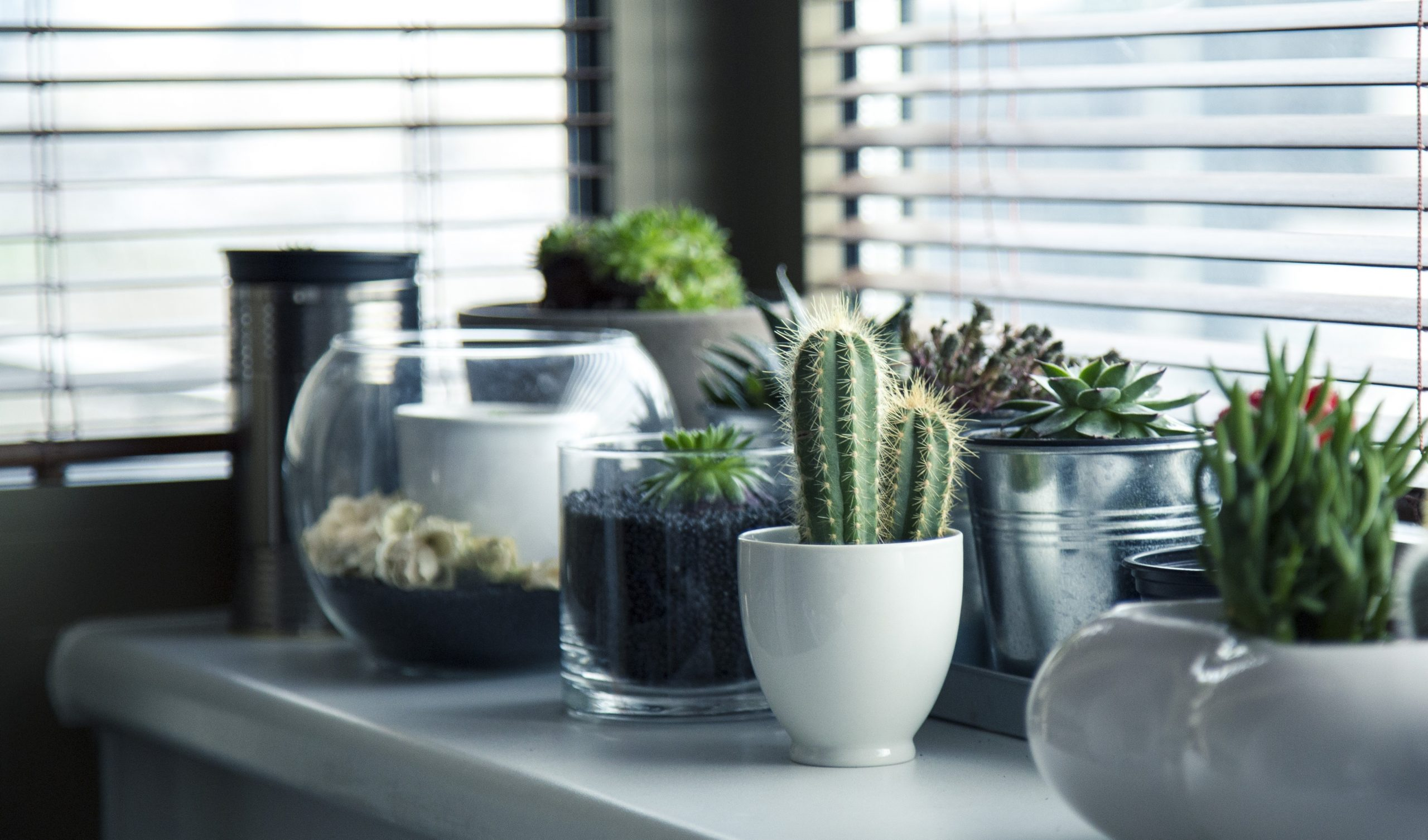 cacti and succulents on windowsill