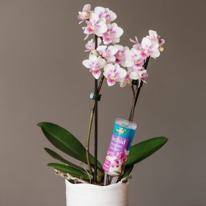orchid droplet feeder in use