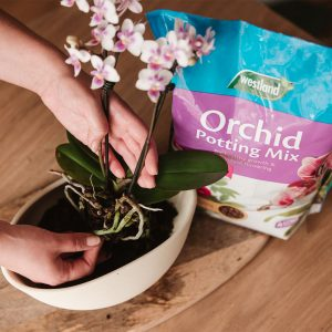 orchid mix in use