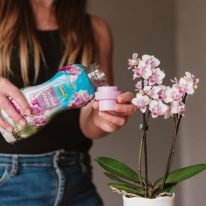 Westland Orchid Water lifestyle
