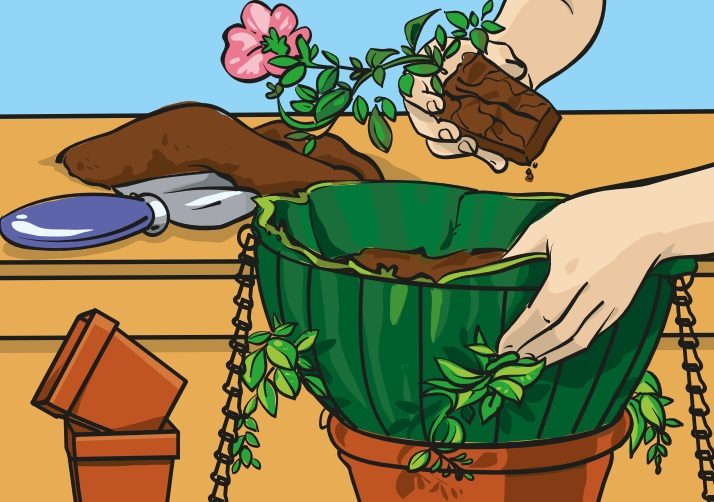 Image of a pair of hands putting a plant into a hanging basket.