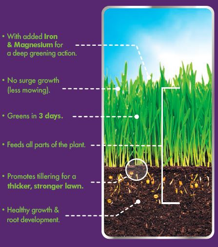 A table describing the feeding and conditioning of lawn grass.