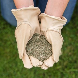 gro sure fine & lux lawn seed 100m2 bag seed