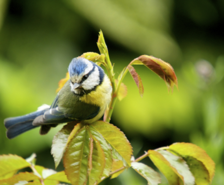 Facts about the migration of Birds in the UK