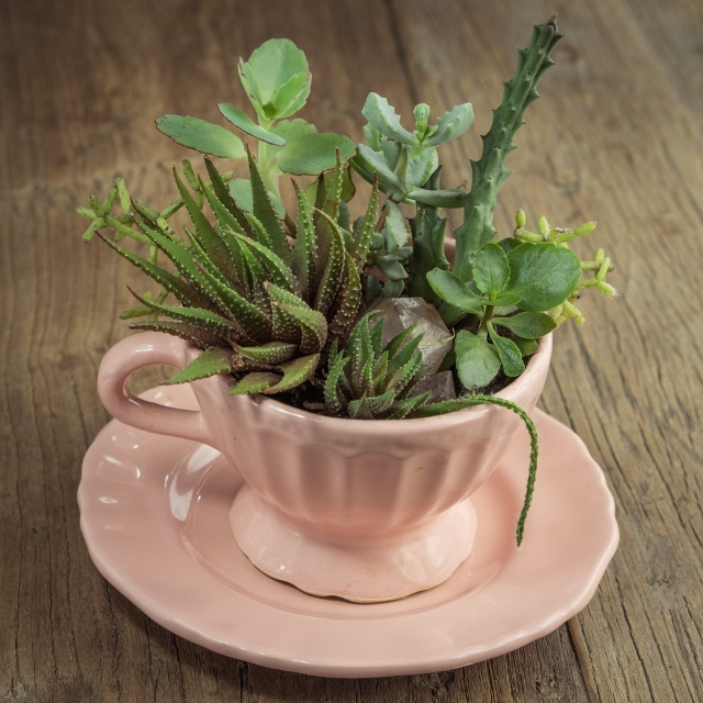 Image of succulents in a pink tea cup and saucer on a wooden table.