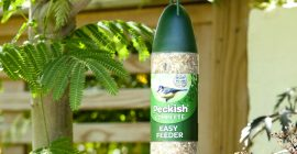 Where to Put Your Bird Feeder