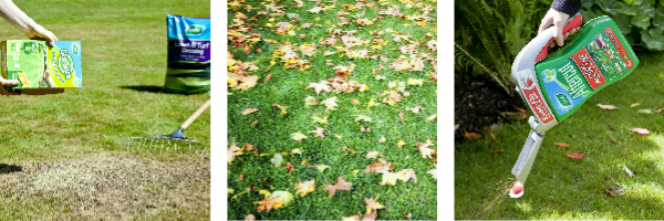 Three images, sowing a lawn, autumn leaves on a lawn and using Aftercut Autumn All in One.