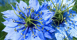 How to Grow Love in a Mist