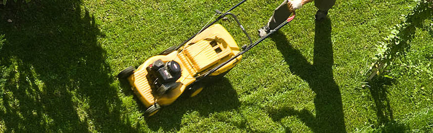 Spring Lawn Care | Lawn Care Advice | Westland Garden Health
