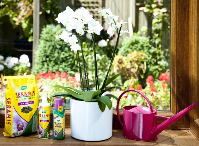 Image of Seramis Orchid Food, Seramis Potting Mix and Seramis Leaf Spray in front of orchid on a sunny windowsill.