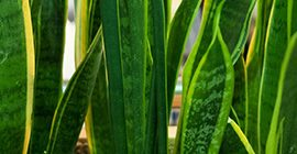 Top-ten Air Purifying Houseplants