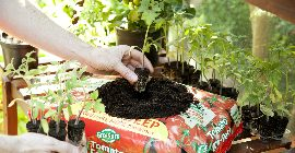 Top Tips for Growing Tomatoes