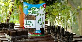 6 reasons why you should sow tomatoes this weekend