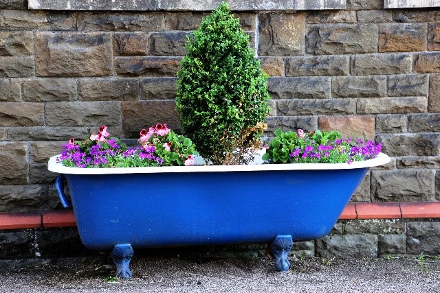 plants planted in bath tub display, alternative container ideas