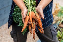 July gardening jobs - harvest veg