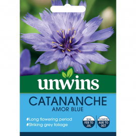 Unwins Catananche Amor Blue