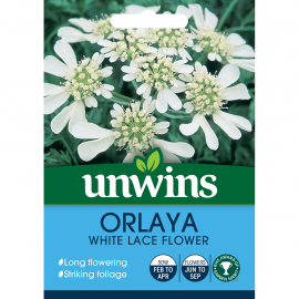 Unwins Orlaya White Lace Flower