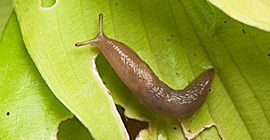 A Slug Control Product for Every Gardener