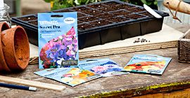 How to Sow Flower Seeds