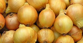 Onions: How to Grow