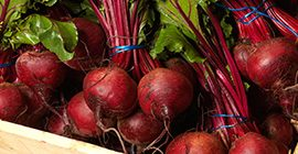 Beetroot: How to grow