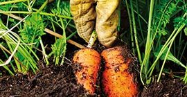 Compost for Fruit & Veg