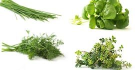 Top 5 Herbs to Grow