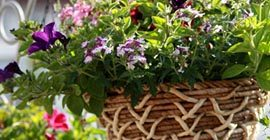 How to Create a Hanging Basket
