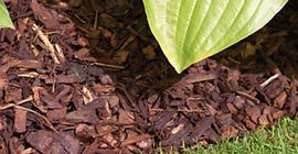 How to apply a bark mulch