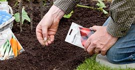 How to sow vegetable seeds