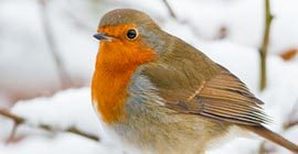 How to Care for the Birds in Winter