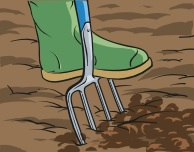 A foot on a garden fork mixing farmyard manure into the ground.