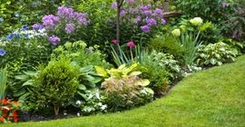 Create Beautiful Garden Borders