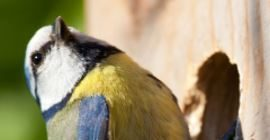 Birds: Breeding season advice