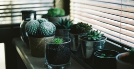 How to Care for Cacti and Succulents