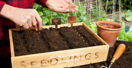 How to Grow Veg from Seed