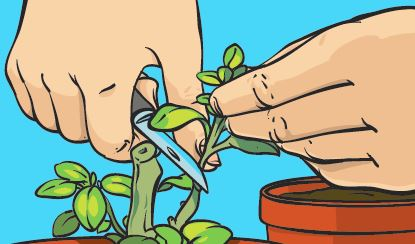 An image of hands showing how to take a cutting.