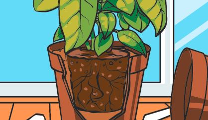 An image showing how to re-pot plants.