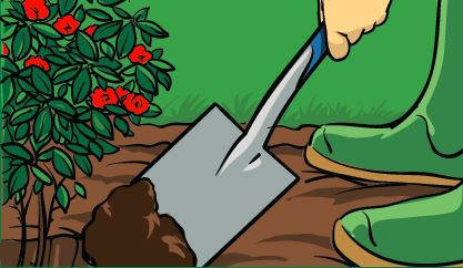 A gardener using a spade to dig a hole for a new plant.