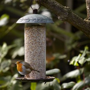 Peckish complete seed and nut mix in a bird feeder
