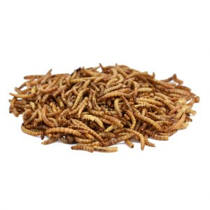 Peckish Mealworms