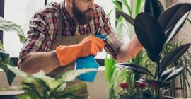 How to Water and Feed Houseplants